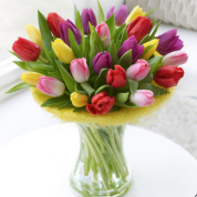 Deluxe Tulip Perfect Gift